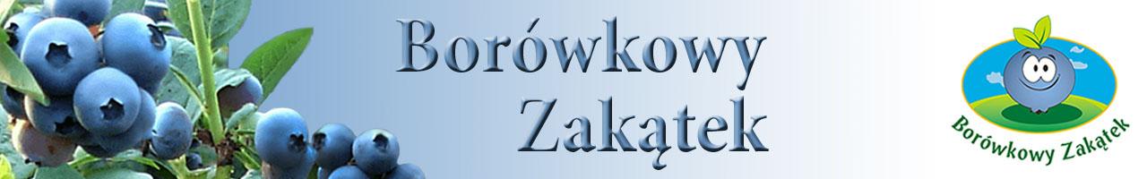 Borówkowy Zakątek - Podkońska Wola, Czerniewice, Łódzkie